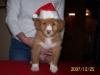 Reggie at 8 weeks