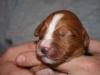 Fraser at 1 week old