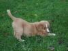 Fraser at 7 weeks