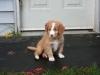 Thompson at 7 weeks