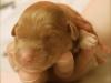 Riva newborn