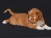 Kenny at 8 weeks