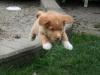 Reba at 8 weeks