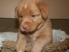Moresby at 5 weeks