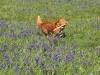 Digby Running