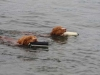 Max and Copper in the water