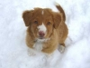 Max puppy in the snow