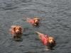 Swimming 05
