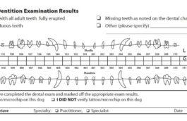 dentition2